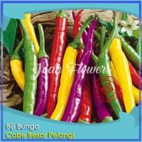 Bibit Tanaman Organic Cayenne Pepper Cabe Besar Rainbow Benih Bibit