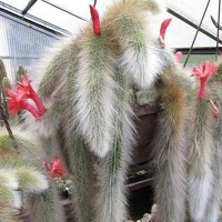 Aulan Egrow 20Pcs/Bag Succulent Plant Seeds Limited Sementes Cactus