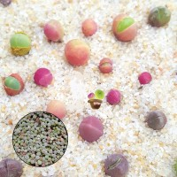 Aulan Egrow 100Pcs/Bag Succulent Plant Seeds Gibbaeum Heathii Bonsai