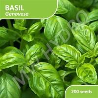 200 Seed - Benih Basil Genovese Import
