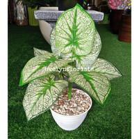 Pohon Sri Rejeki Artificial Pot Tawon Plastik Daun SriRejeki Murah