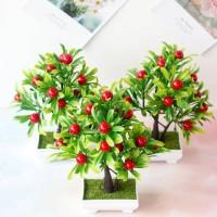 dijual Pohon Bunga Buah Buahan Dan Sayur Sayuran Dekorasi Rumah Hias