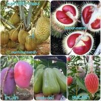 paket 5 bibit buah bibit mangga irwin-durian merah-durian merah-ja