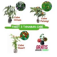 paket tanaman cabe isi 3