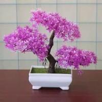pot bonsai / tanaman hias ruangan