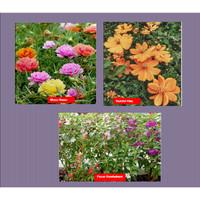 Paket Hemat- Benih Bunga Mudah Tumbuh- Kebun Rumah