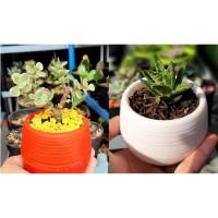 Kaktus dan Succulent mini Pot Bulat