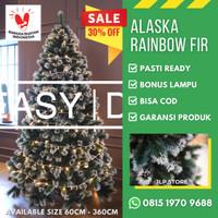 Pohon Natal 1 Meter / 1.2m 120Cm 4Ft ALASKA RAINBOW FIR CHRISTMAS TREE