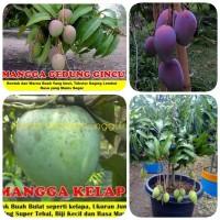 bibit buah mangga 4 macam grab it fast