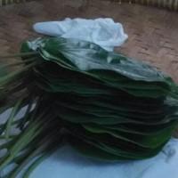 HOT SALE DAUN SIRIH HIJAU / Bunga / Bibit / Kembang / Tanaman / Hias /
