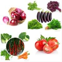 Paket sayuran 16 benih sayur bonus pupuk dan polibag