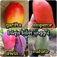 paket bibit buah mangga 4 jenis emperor-garifta-irwin-mahatir bibit