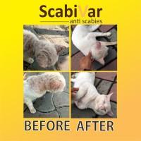 Obat scabies kucing kelinci scabivar 10 ml