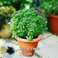 Isi 20 Biji Benih Tanaman Herbal Basil Piccolino Import Uk