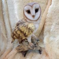 Patung Pajangan Burung Hantu Owl B