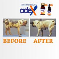 Obat demodex demodek kudis gudikan botak anjing sirup adex 10 ml IG