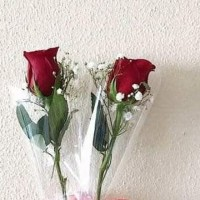 Setangkai Bunga mawar asli | rose single bloom