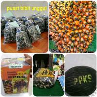 paket 50 bibit kotak benih polong kelapa sawit ppks orizional-pbu