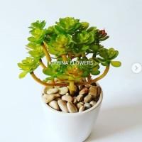 Kaktus pilihan dekorasi rumah
