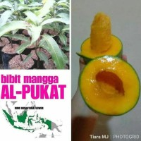 @_# Bibit Buah Mangga Alpukat Kd1 c@r