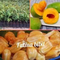 #As_ Paket 3 Bibit Buah Nangka Madu,Mangga Alpukat,Durian Musang King