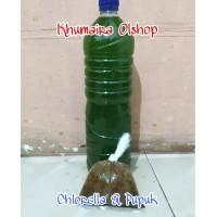 chlorella makanan kutu air moina sp, machacopa, daphnia magna