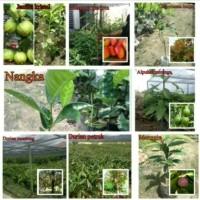 Bibit Tanaman Buah 8 Batang-Mangga-Jambu-Nangka-Rambutan-Durian-Mang
