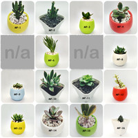Tanaman Hias Sukulen / Succulent Mini Plus pot imut lucu
