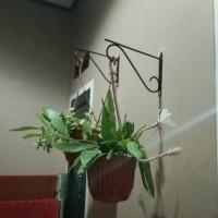 GUNINCO GANTUNGAN POT SIKU cantolan sangkar burung standing pot holder
