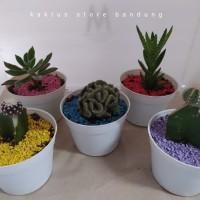 Paket 5 Kaktus Mini Dan Sukulen Pot Putih + Batu warna + Media tanam