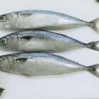 ikan salem per 500gr