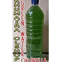 Chlorella murni untuk makanan kultur kutu air, daphnia magna