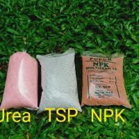 Pupuk Urea / Pupuk TSP / Pupuk NPK / Pupuk Tanaman / Pupuk / Tsp / Npk