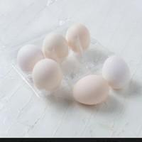 Telur Ayam Kampung Fresh PROMO