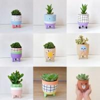 Pot Kaktus Mini Leggie & Kaktus