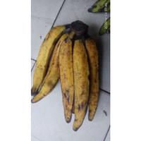 Pisang Tanduk pisang kolak pisang goreng pisang keju 500 gr