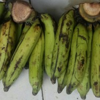 Pisang Nangka pisang kolak 1000 gr