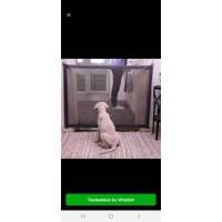 J2E02 Pagar Nylon Penghalang Anjing Kucing Kandang Binatang