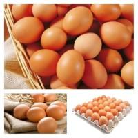 Telur Ayam Negeri 1 Peti/Krat/Ikat