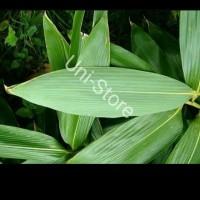 jual daun bambu segar-untuk bungkus bacang dan obat herbal