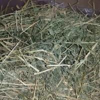 Alfalfa hay Oxbow 1 kg makanan kelinci jerami rabbit food