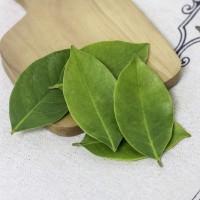 daun salam segar herbal buat bumbu dan obat langsung petil di kebun