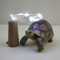 lampu peri tutup botol 1m 10 led putih