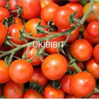 ( 50 Butir ) Benih Tomat Cherry