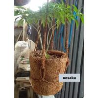 pot gantung cantik unik sabut kelapa cocofiber halus penyubur tanaman