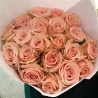 Fresh Universe Roses / Bunga Mawar Potong Segar Merah Muda Universe