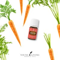 Young Living Oil Carrot Seed