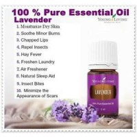 Young Living Oil Lavender