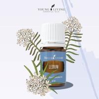 Young Living Oil Ledum