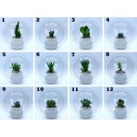 Tanaman Hias Sukulen ( Succulent ) + Pot + Media tanam + Batu hias